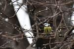 Momentky ze sčítání ptáků