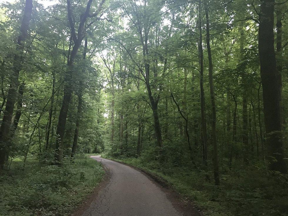 Sucho postihlo i lužní lesy Litovelského Pomoraví.  (19.května 2020)