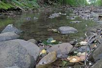 Vyschlý Trusovický potok u Bělkovic