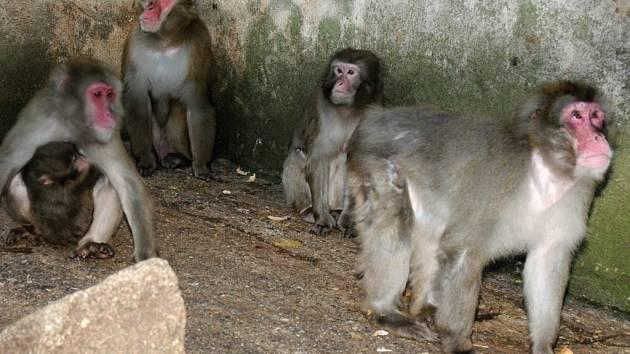 Makakové v olomoucké zoo