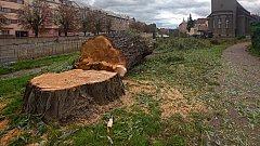 Kácení v okolí evangelického kostela v Olomouci kvůli stavbě protipovodňových opatření