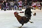Kohout se objevil na olomouckém ledě i po zisku extraligového titulu v roce 1994. Po dvaceti letech tam pobíhající opeřenci vítali extraligový návrat.