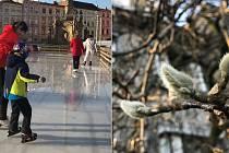 Olomouc 20. prosince 2019 - tající led na Dolním náměstí a pučící stromy