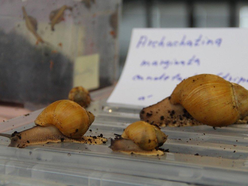 Během sobotního dopoledne okupovali prostory Výstaviště Flora Olomouc nejrůznější živočichové od ještěrek přes morčata až po akvarijní rybičky.