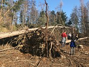 Výstup na Bradlo komplikují polámané stromy a vývraty.