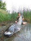 Jakub Tiefenbach v sobotu chytil na Chomoutovském jezeře sumce měřícího neuvěřitelných 224 cm.Jedná se o zatím největšího sumce uloveného letos při lovu non stop na této lokalitě.Archiv autora