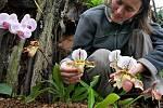 Orchideje v olomouckých Sbírkových sklenících