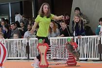 Do dálky, do výšky i přes překážky skákali vycvičení chlupatí mazlíčci v sobotu na Výstavišti Flora Olomouc.
