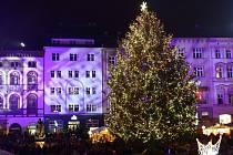 Vánoční strom na Horním náměstí v Olomouci dostal jméno Polárka