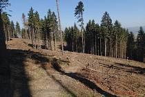 U Nové Hradečné v listopadu 2012 vykácela firma přes zákaz úřadů mladý porost. Souvislá holina byla vytvořena na ploše 0,96 hektaru. Na fotografii lokalita s odstupem 18 měsíců.