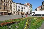Květinový koberec na Horním náměstí v Olomouci