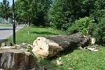Pokácený strom, ze kterého spadla mohutná větev na stezku na okraji Bezručových sadů v Olomouci, 17. 6. 2019