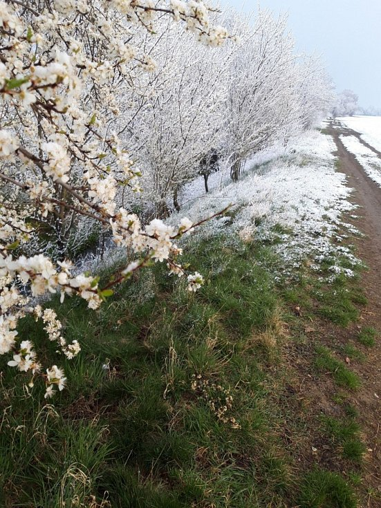 Odchází zima, přichází jaro. 31.března 2020 u Moravy v Kožušanech