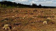Apokalyptická krajina u pramene Odry