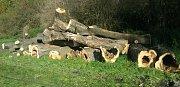 Stromy, které musely ustoupit ochraně před povodněmi, tvoří broukoviště v Černovírském lese.