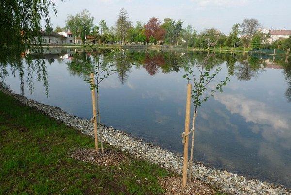 Čestné uznaní vkategorii Stavby dopravní, inženýrské a vodohospodářské: Revitalizace Olomouckého rybníka vLitovli