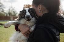 I letos se uskuteční sbírka pro opuštěné psy.