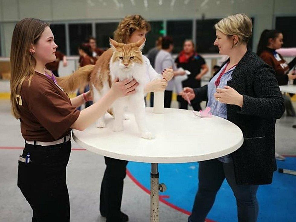 Chovatelka a posuzovatelka britských krátkosrstých koček Lucie Pánková na výstavě společně s dcerou Elisabeth.