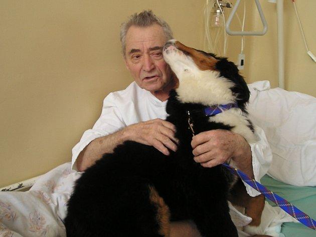 V léčebně se snaží ulevit pacientům i pomocí kontaktu se speciálně cvičenými psy.