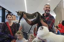 Mezinárodní výstava koček se konala o víkendu 7. a 8. prosince na Výstavišti Flora v Olomouci.