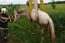 Vyprošťování koně z příkopu u Seničky