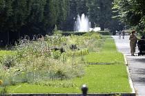 Traviny v aleji ve Smetanových sadech