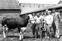 PRACOVNÍCI ŽIVOČIŠNÉ VÝROBY. Zleva Milan Roubíček, František Molík, Marie Rumpíková, Anežka Finsterlová, Emílie Ptáčková spolu se zootechniky p. Švábenským a p. Vychodilem při předvádění nejlepších dojnic v roce 1980.