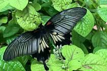 Motýlárium v Olomouci-Holici