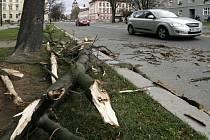 Silný vítr ničil stromy.