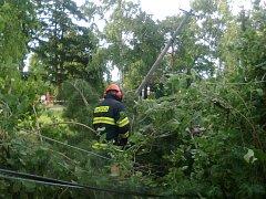 Kácení borovice v Březové skončilo pádem stromu na elektrické vedení