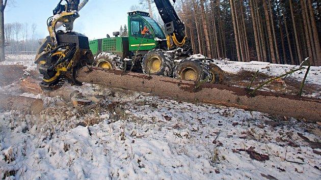 Těžba v lese napadeném kůrovcem. Ilustrační foto