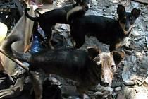 Psi v obydlí Zdeňky Grohmanové ve Štarnově