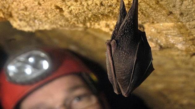 Zimoviště netopýrů v Javoříčských jeskyních