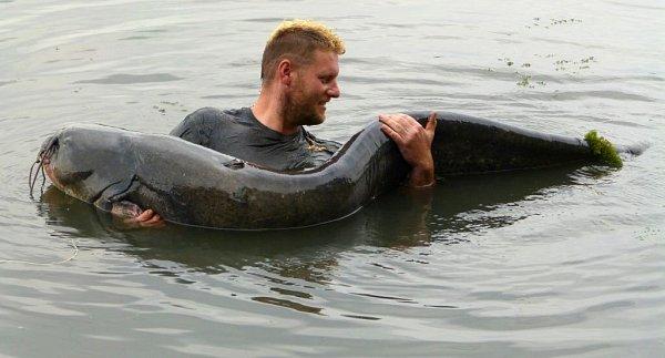 Jiří Zavadil zOlomouce ulovil vneděli 25.srpna 2013na Chomoutovském jezeře sumce vážícího 85kg a dlouhého 237cm