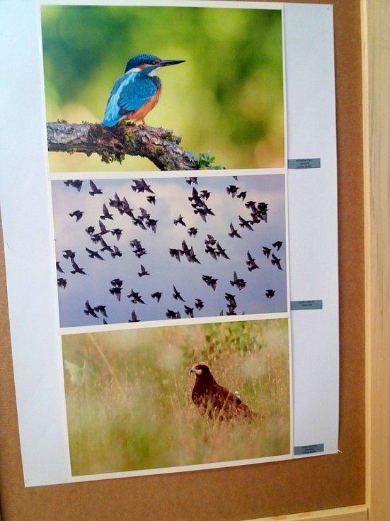 "Fotografická výstava ""Příroda Olomoucka"" v Galerii DDM v Olomouci"