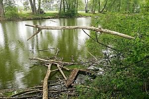Čtvrtá etapa protipovodňových opatření spočívá ve výrazném zapojení přírodě blízkých opatření do celého projektu.