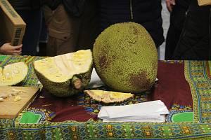 Pavilon E olomoucké Flory, neděle 27. ledna, akce Všechny chutě Afriky v Olomouci