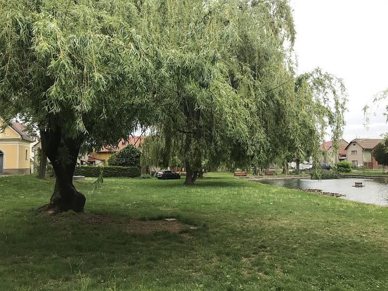 Bělkovice-Lašťany. V obci v minulosti zadržovali více vody, byla zde i menší retenční nádrž. Na snímku rybník, který měl v minulosti větší rozlohu.