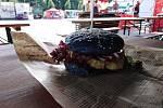 Veganské burgery Amylon z Vysočiny (na snímku varianta s houbou Shiitake v černé bulce