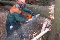 Následky lednového řádění hurikánu Kyrill se projevily výrazným poklesem cen dřeva.