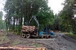 Paseka u Radíkova. V boji s kůrovcem lesníci prohrávají.