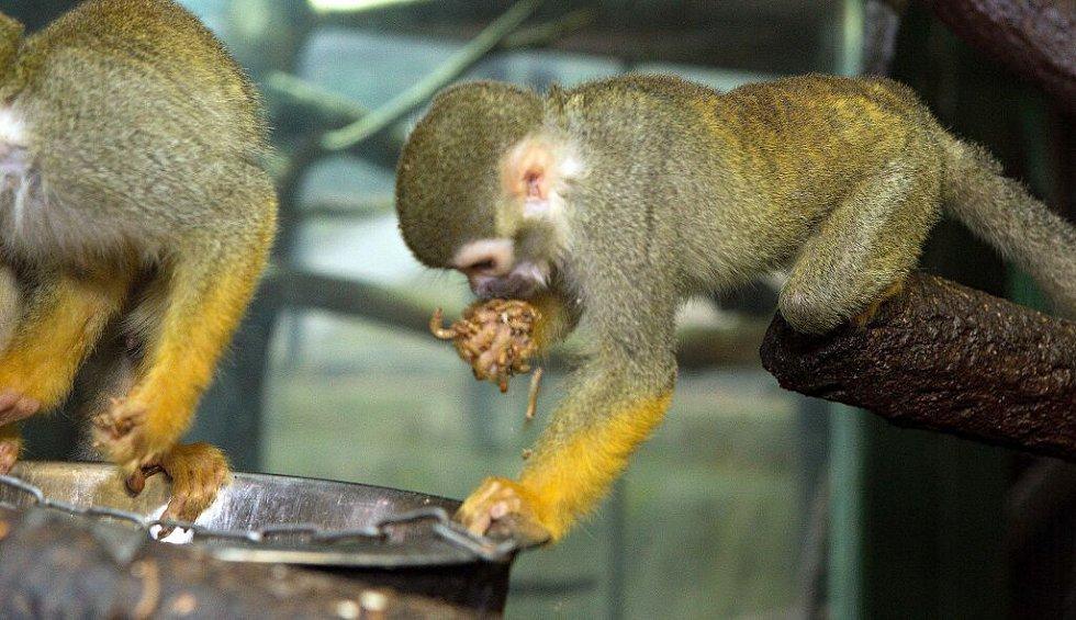 Natáčení kotulů v olomoucké zoo
