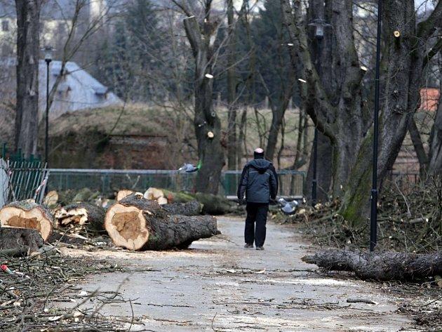 Kácení starých stromů v Michalském výpadu
