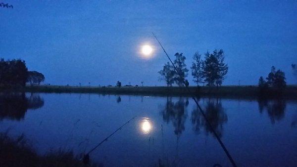 Modrý měsíc jako společnost na rybách
