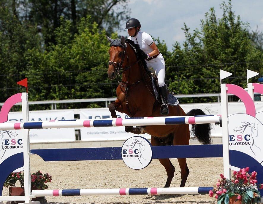 René Olšák. Světový pohár CSI*** Olomouc. Závody pro šestileté a sedmileté koně.