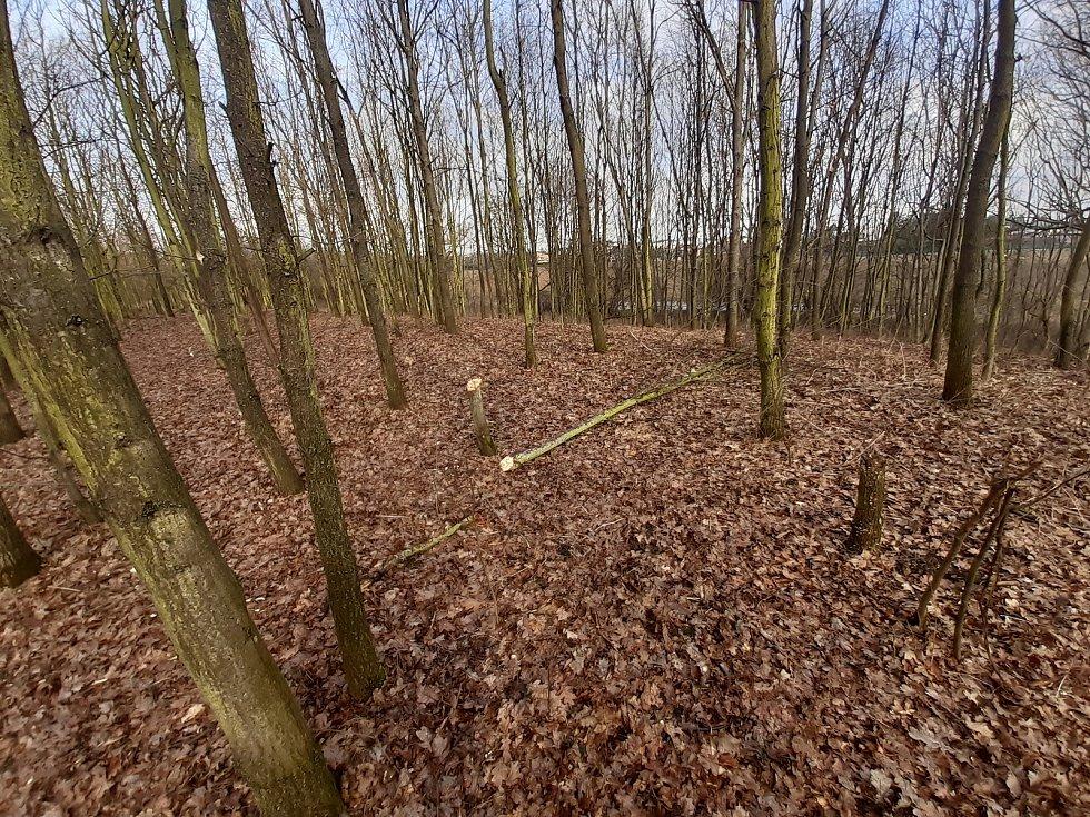 """Neschválené """"úpravy"""" lesa vOlomouci-Neředíně."""
