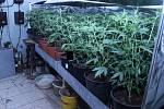 Pěstírny a zadržené rostliny konopí, které policie našla u skupiny výrobců marihuany z Olomoucka