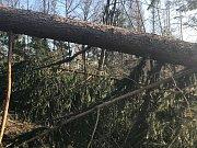 Výšlap na Bradlo znesnadňují polámané stromy a vývraty.
