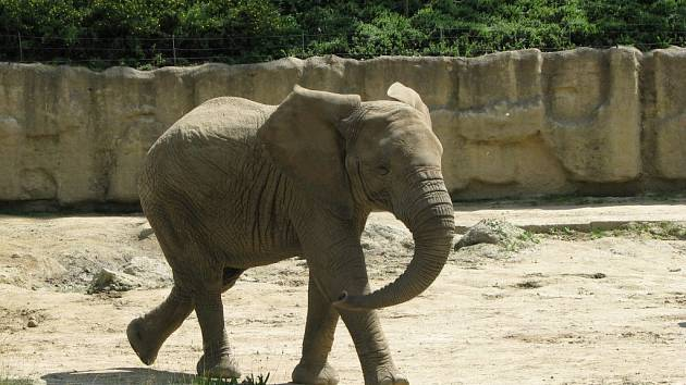 Zoo Zlín-Lešná: výběh slonů