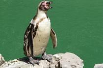 Zoo Zlín-Lešná: tučňák
